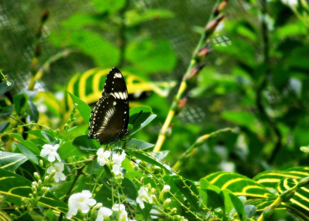 Butterfly Garden Bohol