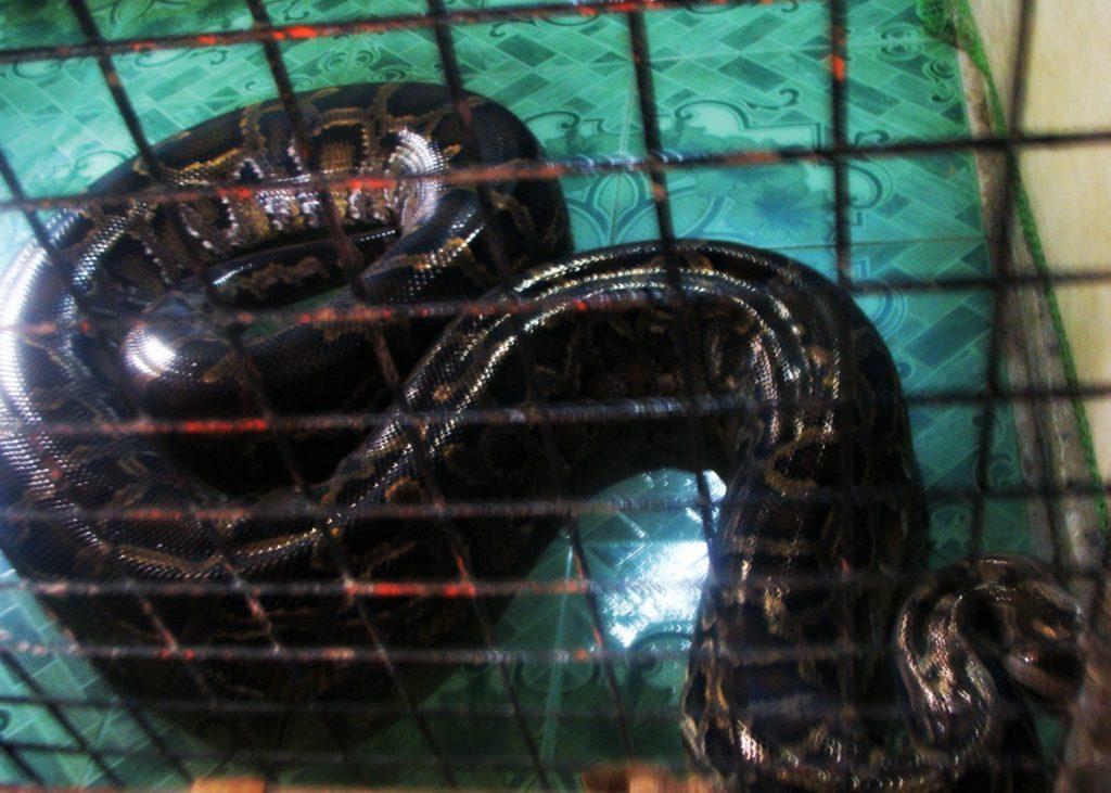 Snake Bohol Philippines